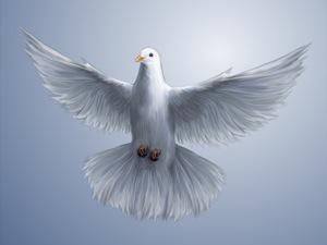 flying dove hope