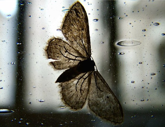 moth window