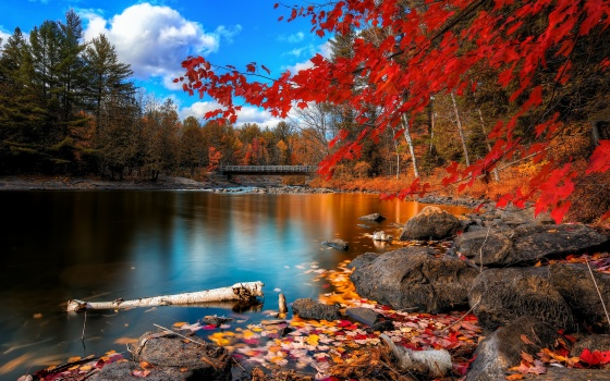 fall_foliage-2880x1800