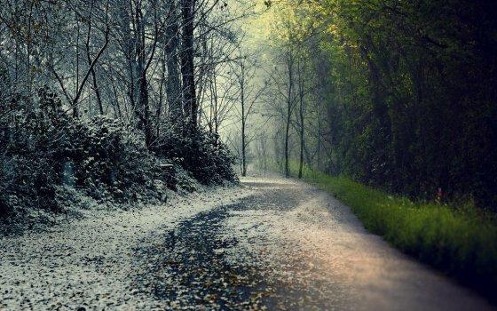 winter_spring_by_megustadeviantart-d5oejwl